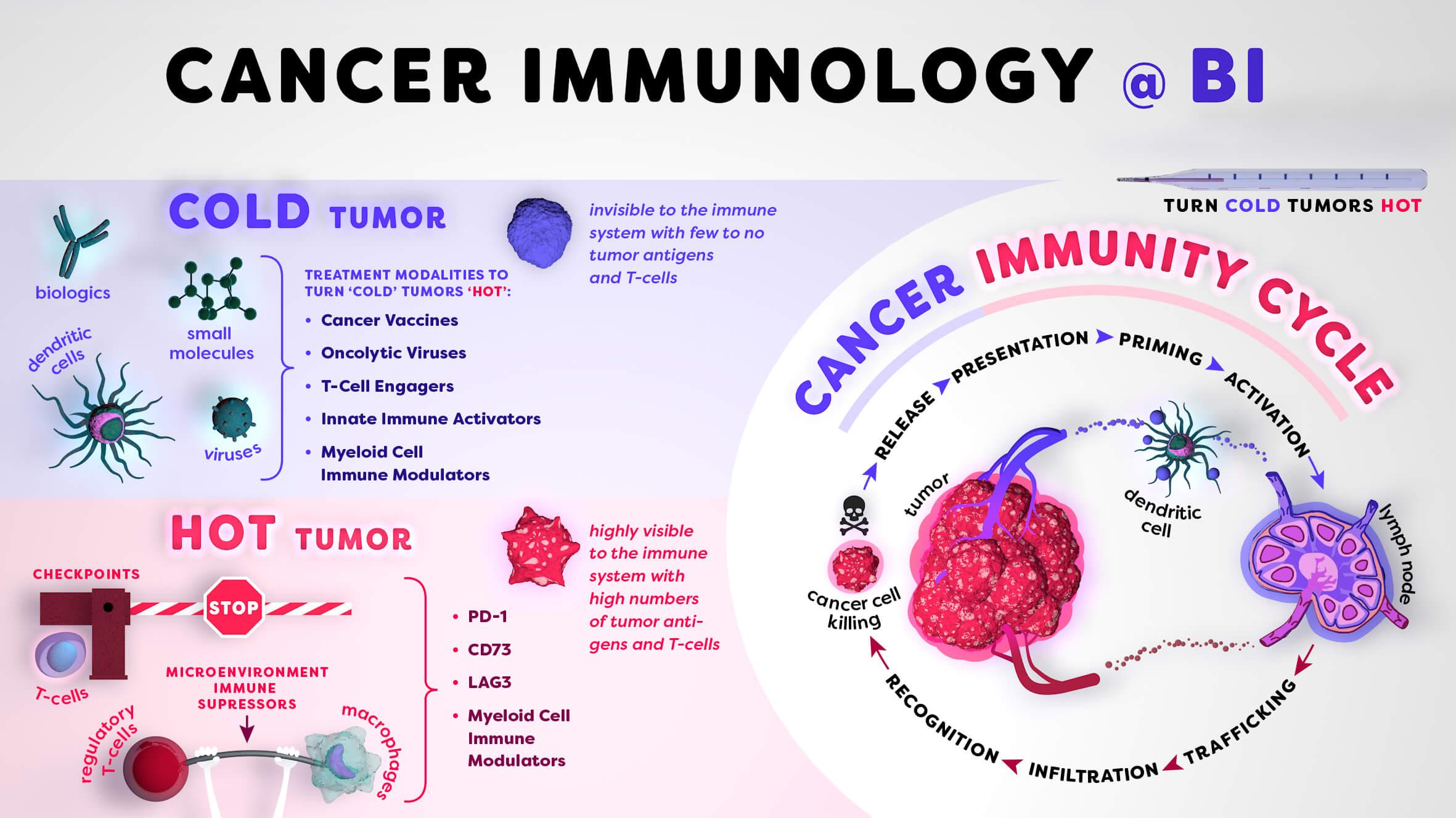 Infographic / Cancer Immunology @ Boehringer Ingelheim © Daniela Leitner