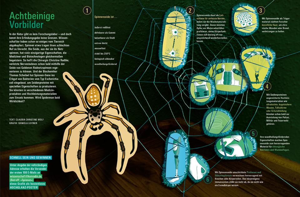 Infografik Spinnenseide / bild der wissenschaft
