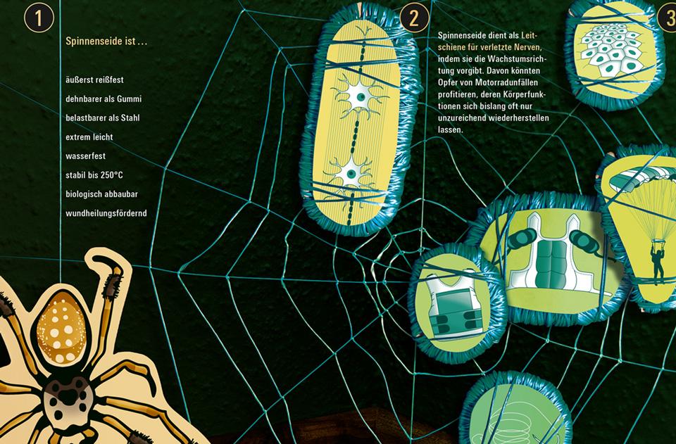 Daniela Leitner / Infografik Spinnenseide / bild der wissenschaft / Detail Spinnennetz