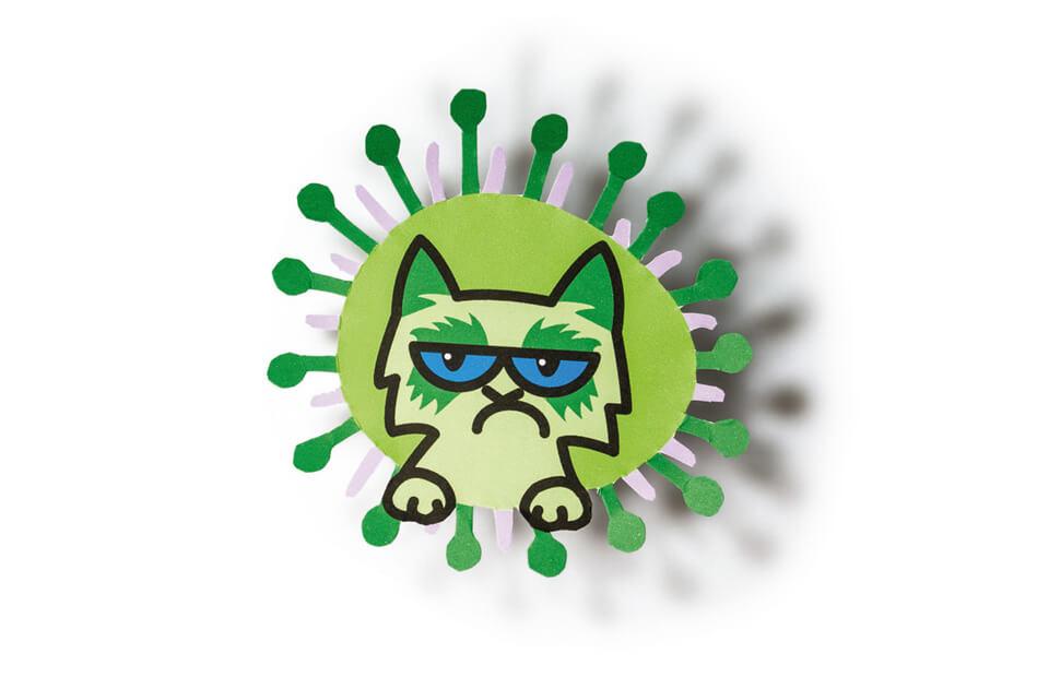 Titelthema Internet und soziale Medien / bild der wissenschaft / Teil 6: Vorsicht, ansteckend! – Verbreiten sich Daten im Netz wie echte Viren? / Virus Grumpy Cat