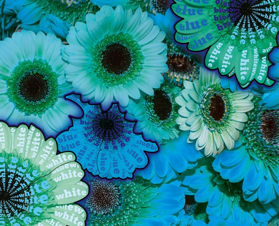 Nature Genetics / Coverserie / Daniela Leitner / Die Genetik von Blütenblättern