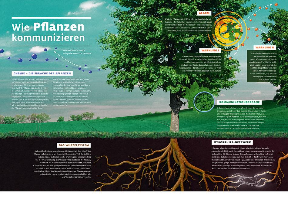 bild der wissenschaft, Ausgabe März 2019 / Infografik: Wie Pflanzen kommunizieren / Daniela Leitner
