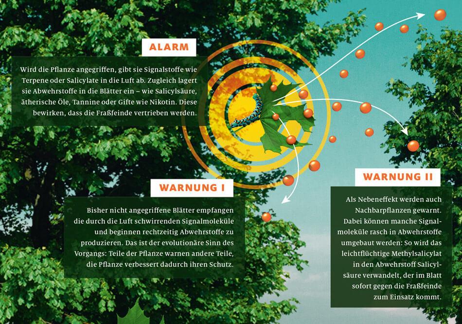 bild der wissenschaft, Ausgabe März 2019 / Infografik: Wie Pflanzen kommunizieren: Alarm & Warnung / Daniela Leitner