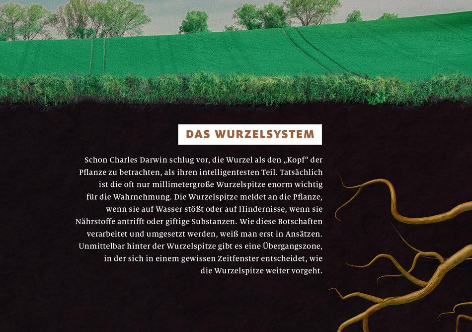 bild der wissenschaft, Ausgabe März 2019 / Infografik: Wie Pflanzen kommunizieren: Das Wurzelsystem / Daniela Leitner