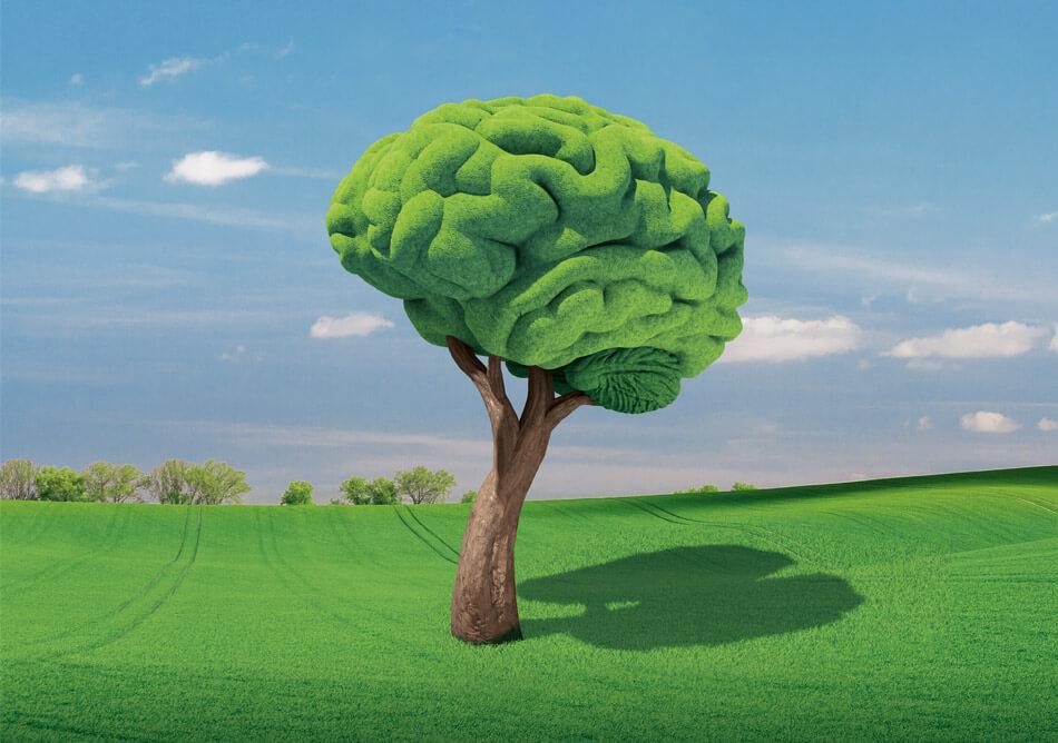 bild der wissenschaft, Ausgabe März 2019: Die Intelligenz der Pflanzen / Covermotiv: Daniela Leitner
